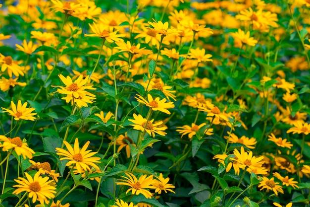 아름 다운 노란 꽃과 함께 봄 배경입니다.