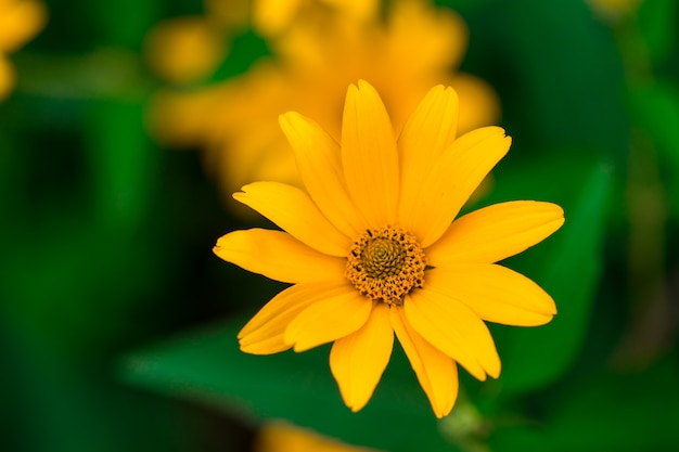 Spring background with beautiful yellow flowers.