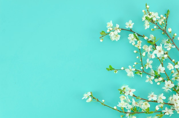 Spring background with white blossom tree branches light mint background.