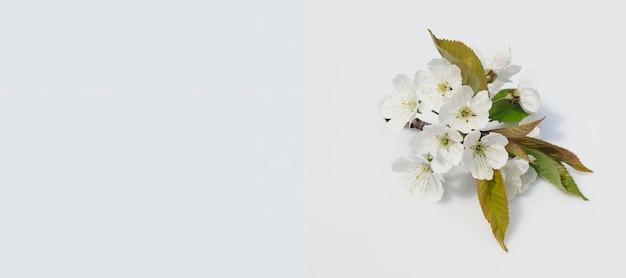 Весенний баннер веточка цветущих грушевых белых цветов на сером фоне вид сверху с копией пространства