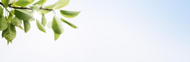 Весенний баннер с зелеными листьями на светлом фоне с копией пространства для текста