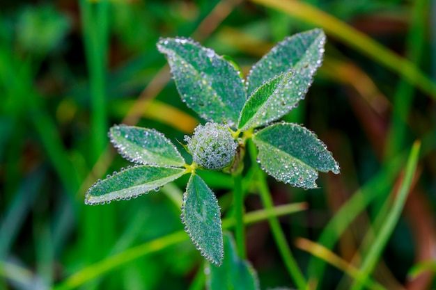 Spring. beautiful natural of green grass with dew and water drops.