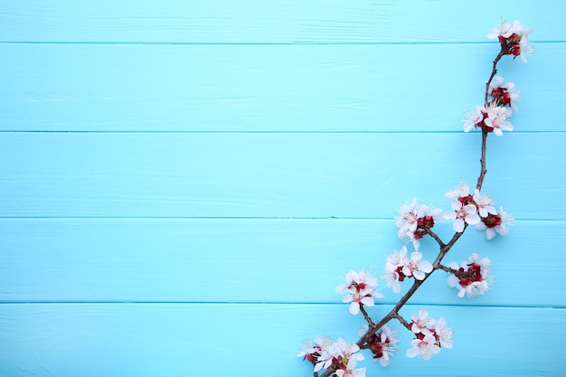 Spring blooming branches on blue wooden background with copyspace.