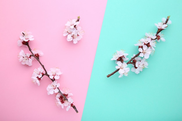 Spring blooming branches on a colorful background.