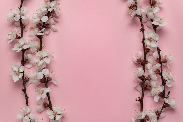 Весенние цветущие ветви на розовом фоне в рамке. шаблон. фон. скопируйте пространство.