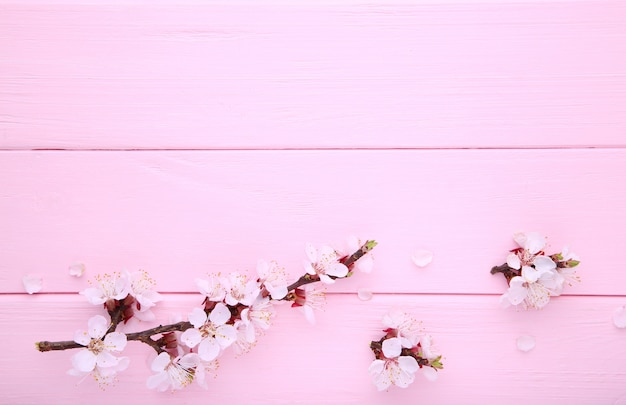 Spring blooming branches on pink wooden background with copyspace.