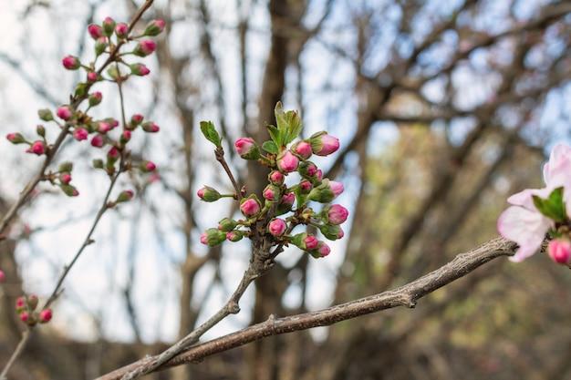 春に咲く花がブランチにクローズアップ
