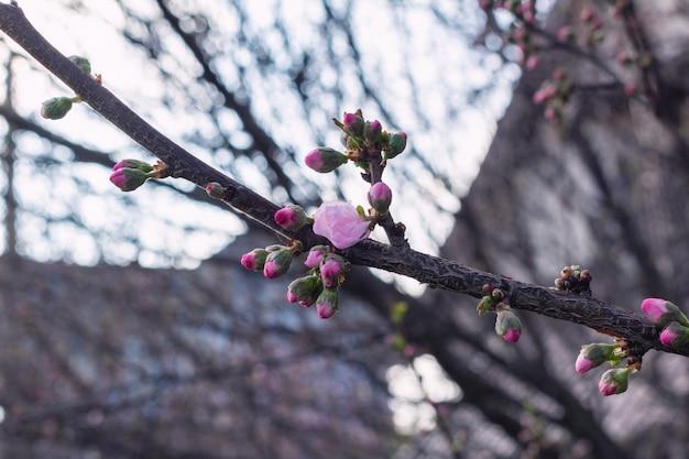ブランチに咲く春の花をクローズアップ