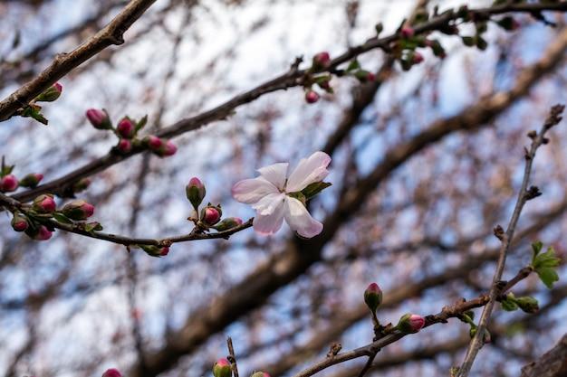 ブランチに咲く春の花