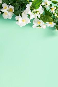 春咲くミント色の背景。緑の葉と白い花ジャスミンの花のボーダー。コピースペース