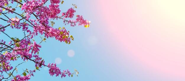 봄에 봄 개화 나무