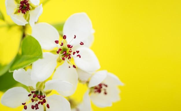 Весенний цвет и апрельская цветочная природа на желтом