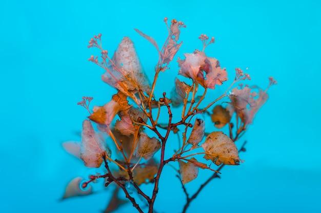 春の花の背景。咲く木と太陽フレアの美しい自然シーン。晴れた日。春の花。美しい果樹園。抽象的な背景をぼかした写真。春。