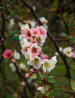春の花の背景。咲く木と太陽のフレアのある美しい自然のシーン。晴れた日。春の花。美しい果樹園。抽象的なぼやけた背景。春