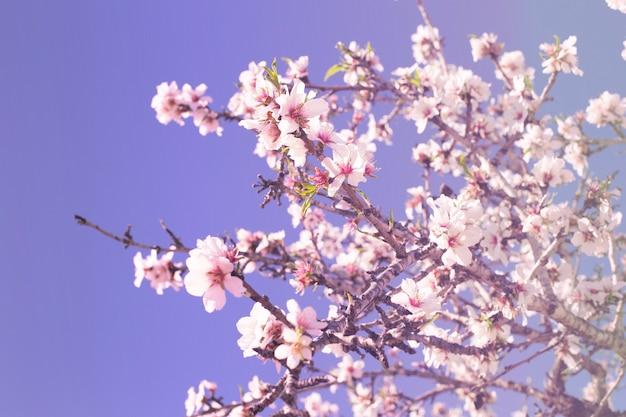 Весной цветут фон. сцена красивой природы с цветущим деревом в солнечный день. весенние цветы. красивый фруктовый сад весной. абстрактный фон.