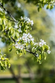 春の花。桜の木。春のプリント。リンゴの木の枝。リンゴの花