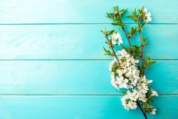 Ветви вишни цветения весны на голубой деревянной предпосылке.