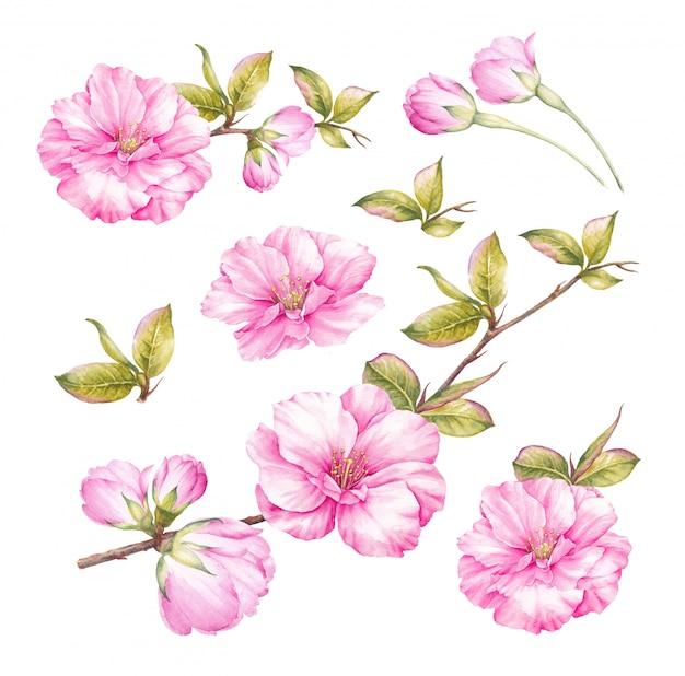 Spring blossom pink flower set.