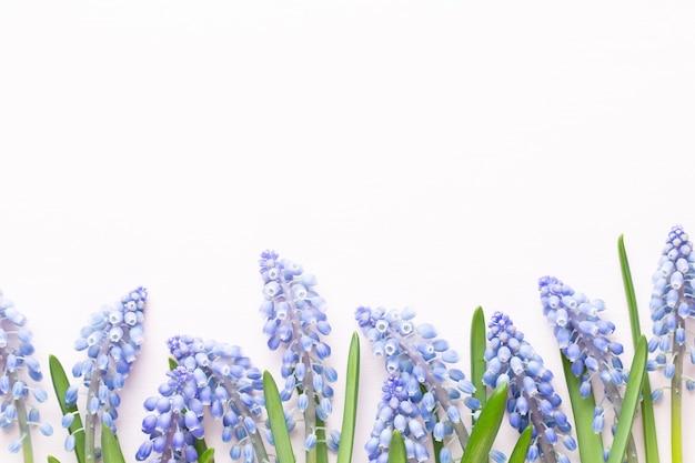 Весенние синие цветы мускари. цветы мускари на розовом пастельном фоне.