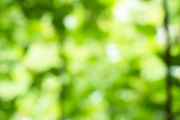 봄 bokeh 자연 추상적 인 배경 녹색 잎 흐리게, 아름 다운