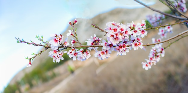 Spring border or background art with pink blossom