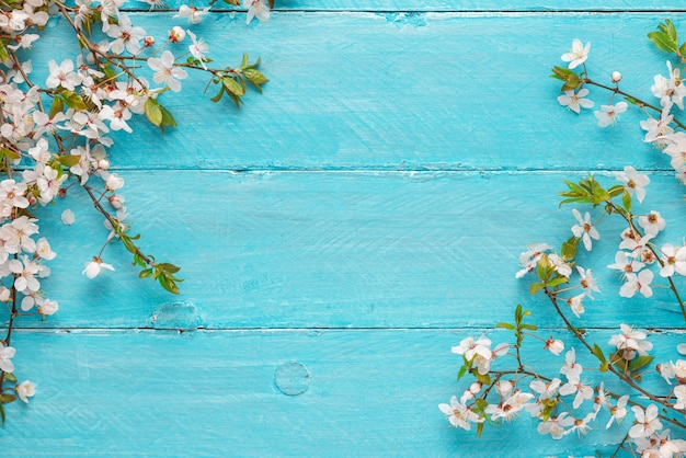Spring border flowers cherry blossoming on blue wooden background. top view with copy space