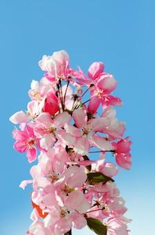 봄 테두리 또는 꽃 배경