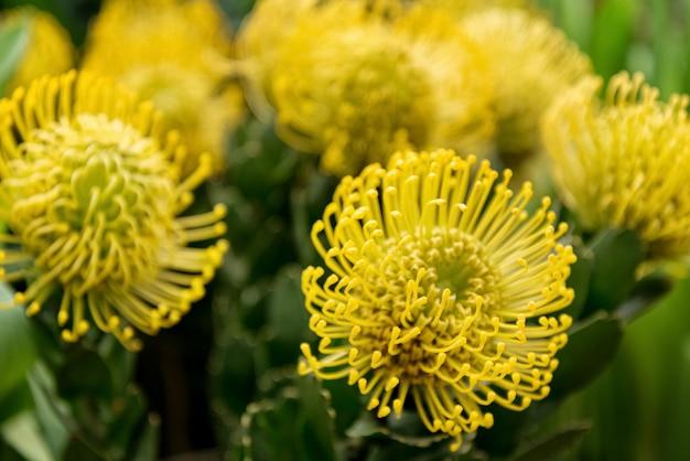 Весенний букет из желтых махровых цветов