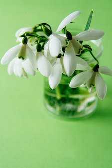 Spring bouquet of white snowdrops in vass. green background.
