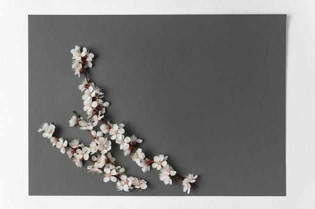 灰色の背景に花の春の枝。テンプレート。背景。モックアップ。