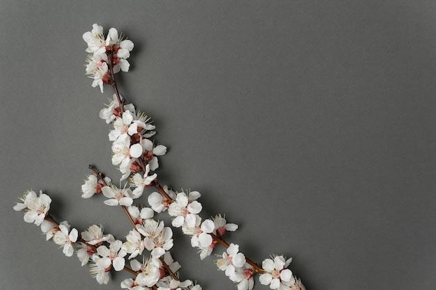 Весенние ветви в цвету на сером фоне. белые цветы. фон. скопируйте пространство.