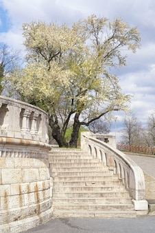 Spring in budapest, tree in full blum by the staircase to fishermans bastion