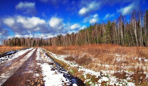 Spring in the central russian forest