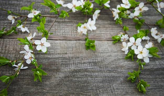 Spring cherries blossom