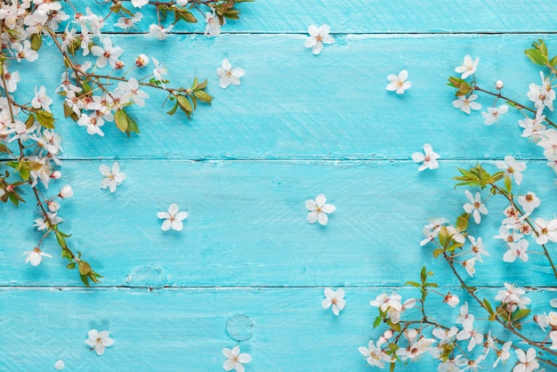 Spring cherry blossom flowers on blue wooden table. top view. flat lay background