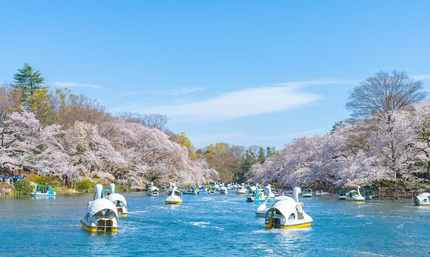 Spring cherry blossom tree and people ride duck boat at chidorigafuchi park, japan.