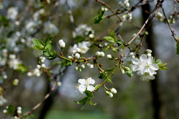 봄 벚꽃 꽃