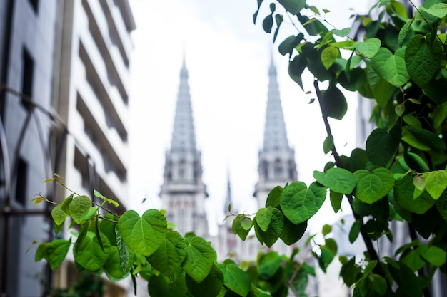 Spring cityscape with green leaves and catholic church in the background