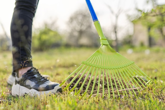 정원에서 봄 청소, 마른 풀과 잎에서 푸른 풀을 청소하는 근접 촬영 갈퀴