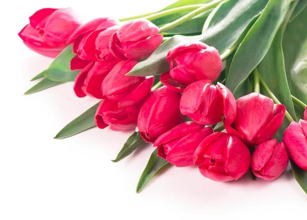 白で隔離ピンク、赤の美しい花と花束の春色のチューリップ