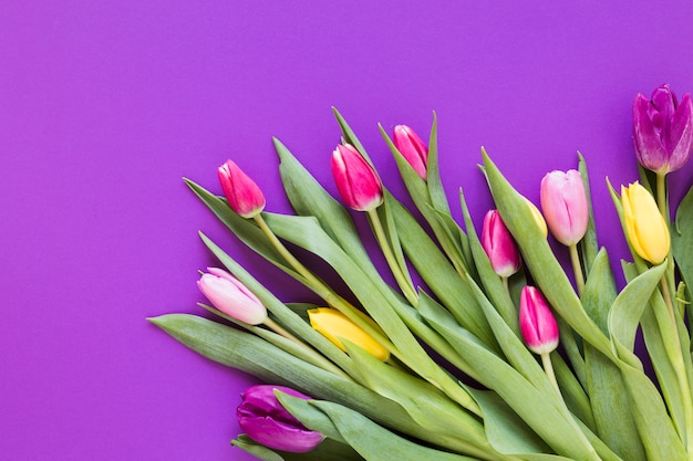 Spring colourful tulip flowers with leaves