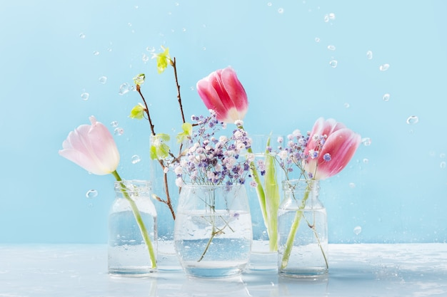 Spring composition with water dew of fresh pink tulips flowers and fresh birch branches in glasses
