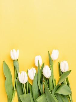 봄 개념. 노란색 바탕에 아름 다운 흰 튤립의 상위 뷰