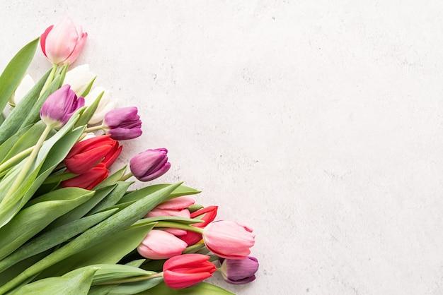 봄 개념. 복사 공간 흰색 콘크리트 배경에 튤립 꽃다발