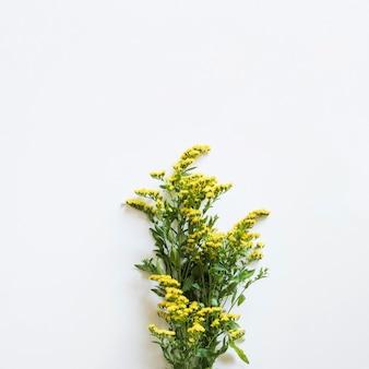Весенняя концепция с полевыми цветами