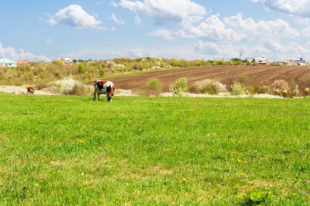 牧草地、耕作地、動物のいる春の田園風景