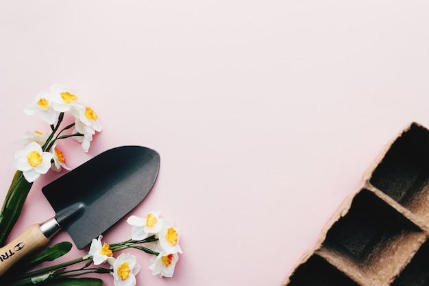 Весенние нарциссы, садовая лопата, эко кассеты для рассады. розовый фон. фото высокого качества