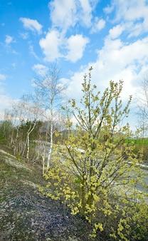 田舎道とキャットスキンと花柳の木と春の鈍い風景