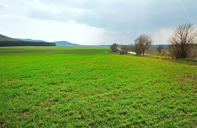 田舎道と緑の牧草地のある春の鈍い風景