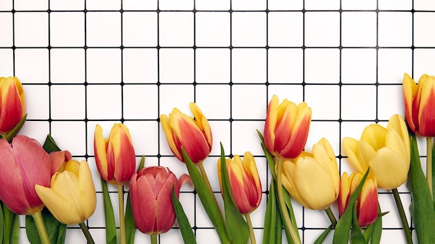 Spring floral background with copy space. flat-lay frame made of tulips blossom flowers with water drops, top view, wide composition.